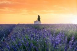 France, Provence Alps Cote d'Azur, Valensole Plateau, Lavender Field at sunrise
