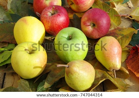 France, Rhone/Alps, Ferney Voltaire, November 2017: French Apple varieties are Golden, Rocha, Granny Smith, Pink Lady, Royal Gala and pear Red Globe lying on the carpet of autumn fallen leaves. #747044314