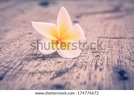 frangipani falling on the wooden
