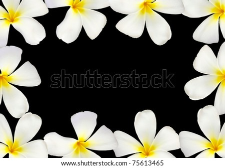 Frangipani flower frame isolated on black background