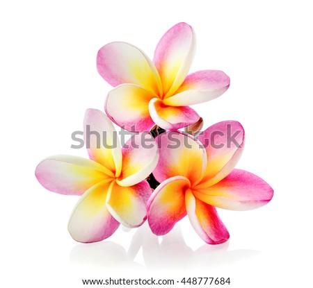 Frangipani flower isolated on white background #448777684