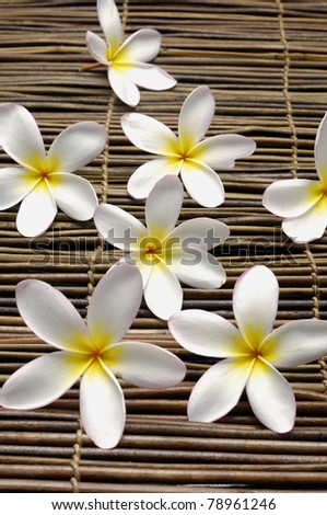 frangipani flower on texture of bamboo mat close up