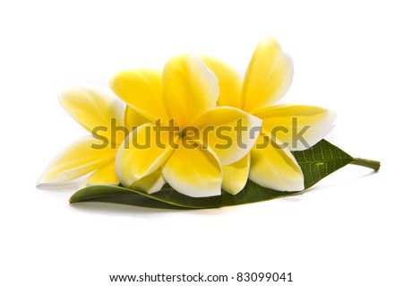 frangipani flower on white backgrounds - stock photo