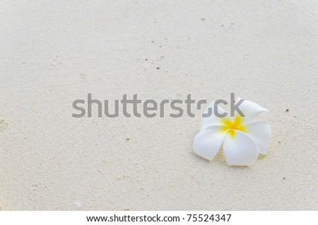 Frangipani flower on white sand.