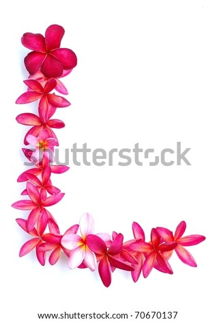 Frangipani flowers for border