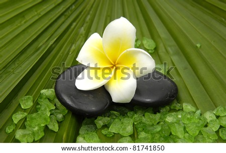 Frangipanis on zen stones with green bath salts on palm leaf background