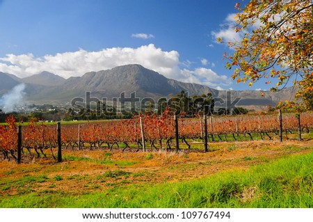 Franschhoek wineland area, South Africa