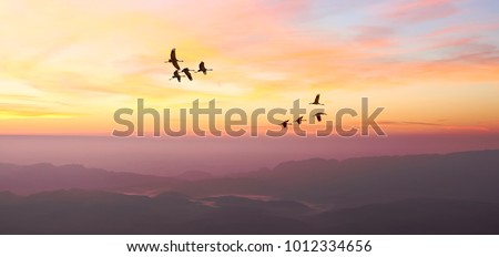 Free birds flying at sunrise over the foggy mountains in the wild. Migrating cranes. Nature migration. Wonderful freedom world. Environment protection. Travel concept