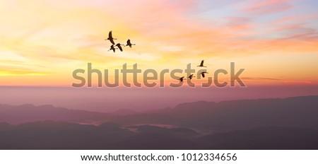 free birds flying at sunrise...