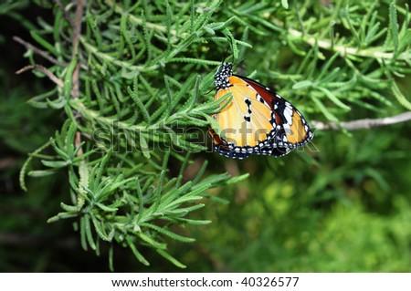 free butterfly in a garden