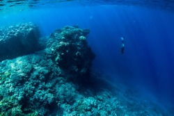 Free diver dive in ocean, underwater view with rocks and corals