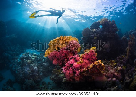 Free diver swimming underwater over vivid coral reef. Red Sea, Egypt #393581101