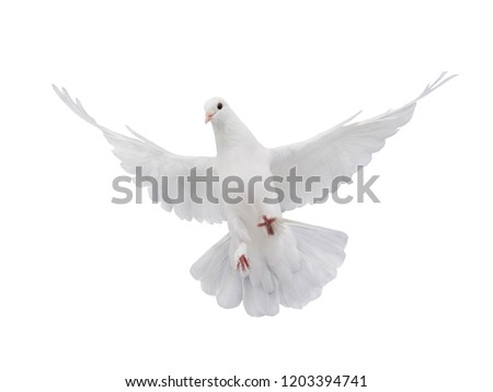 Photo of  free flying white dove isolated on a white background as symbol of peace