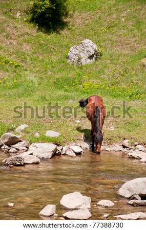 Free horse drinking water from a clear mountain river