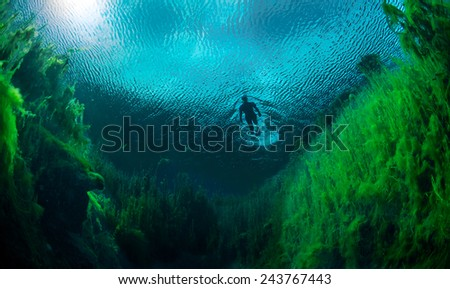 Freediver swimming in freshwater ponds at Piccaninnie ponds conservation park, South Australia
