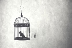 freedom concept, bird in an open cage