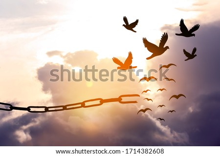 Freedom concept. Silhouettes of broken chain and birds flying in sky ストックフォト ©