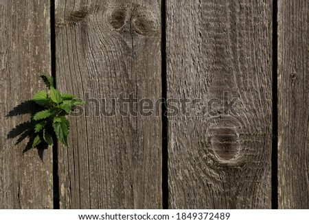 freedom.desire for freedom.a green sprout sprouted through the fence.close up.wooden fence.copy space. Stock photo ©