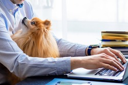 Freelancer man, bisnessman with his friendly pomeranian spitz using laptop at remote home office. loyal dog looking at the owner. pet adoption. closeup. copy space, text