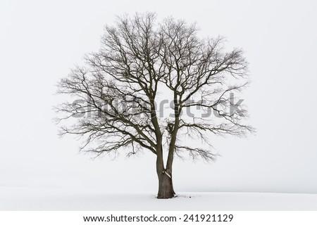 Freestanding tree in winter #241921129