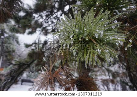 Freezing rain, ice rain, freezing nature #1307011219