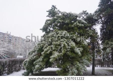 Freezing rain, ice rain, freezing nature #1307011222