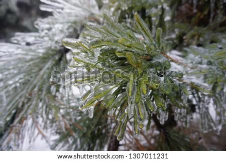 Freezing rain, ice rain, freezing nature #1307011231