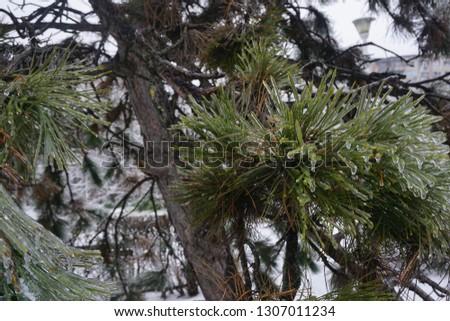 Freezing rain, ice rain, freezing nature #1307011234