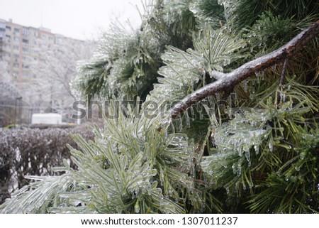 Freezing rain, ice rain, freezing nature #1307011237