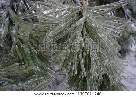 Freezing rain, ice rain, freezing nature #1307011240