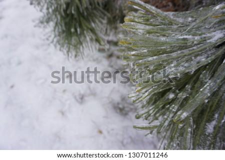 Freezing rain, ice rain, freezing nature #1307011246