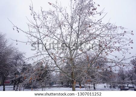 Freezing rain, ice rain, freezing nature #1307011252