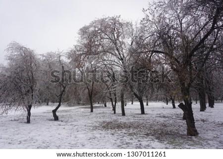 Freezing rain, ice rain, freezing nature #1307011261