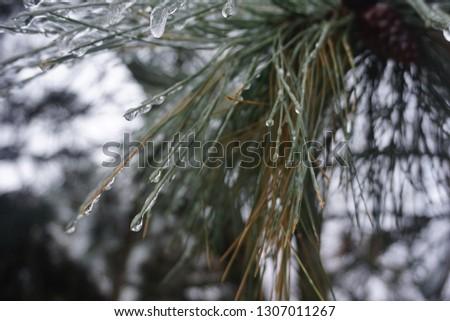 Freezing rain, ice rain, freezing nature #1307011267