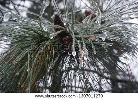 Freezing rain, ice rain, freezing nature #1307011270