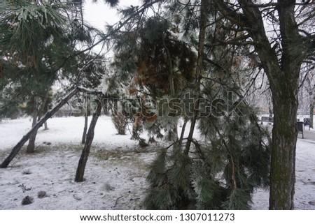 Freezing rain, ice rain, freezing nature #1307011273
