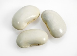 French Beans called Soissons Beans, phaseolus vulgaris against White Background