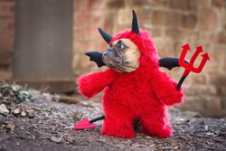 French Buldog dog with red devil costum wearing a fluffy full body suit with fake arms holding pitchfork, with devil tail, horns and black bat wings standing in front of blurry wall