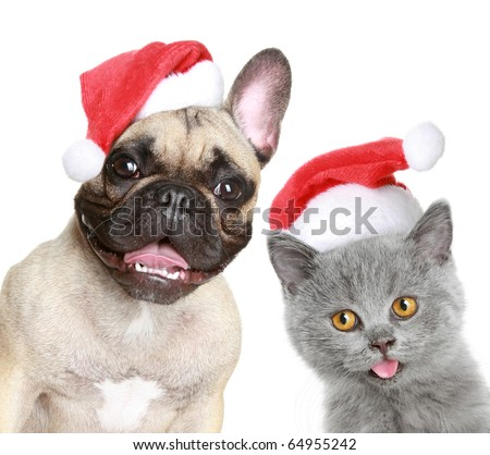 French bulldog and kitten in red Christmas cap on a white background