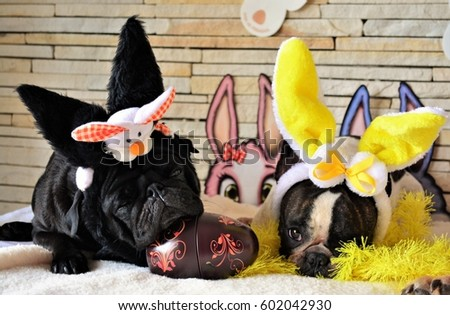 Stock Photo French bulldog and sleeping pug at Easter