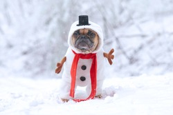French Bulldog dog dressed up as snowman with funny full body suit costume with red scarf, fake stick arms and small top hat in winter snow landscape
