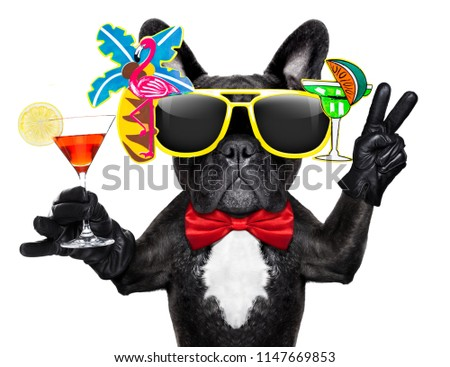 french bulldog dog holding martini cocktail glass ready to have fun and party and get drunk , isolated on white background