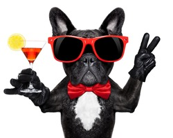 french bulldog dog holding martini cocktail glass ready to have fun and party, isolated on white background#