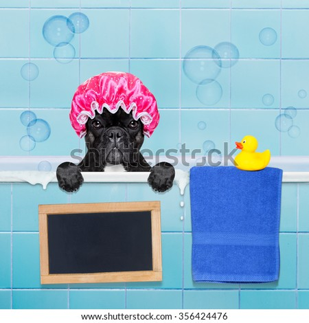 french bulldog dog in a bathtub not so amused about that , with yellow plastic duck and towel,wearing a bathing cap, banner or blackboard added