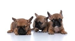french bulldog dog looking at his friend that is sleeping against white background