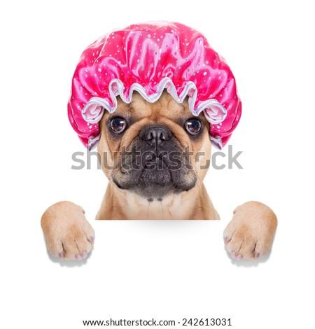 french bulldog dog ready to have a bath or a shower