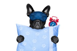 french bulldog dog  resting ,sleeping or having a siesta  with alarm  clock and eye mask,  holding a pillow, isolated on white  background