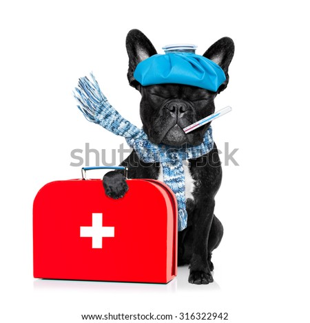 french bulldog dog  with  headache and hangover with ice bag or ice pack on head, eyes closed suffering , isolated on white background, holding first aid kit