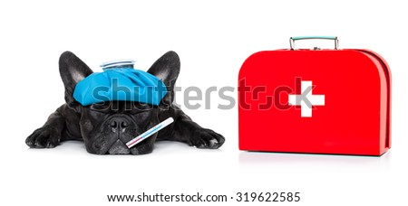 french bulldog dog  with  headache and hangover with ice bag or ice pack on head, eyes closed suffering , first aid kit beside,  isolated on white background