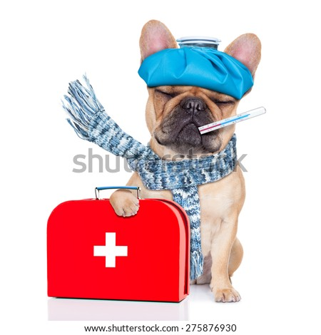 french bulldog dog  with  headache and hangover with ice bag or ice pack on head,thermometer in mouth with high fever, holding   first aid kit, eyes closed and suffering , isolated on white background